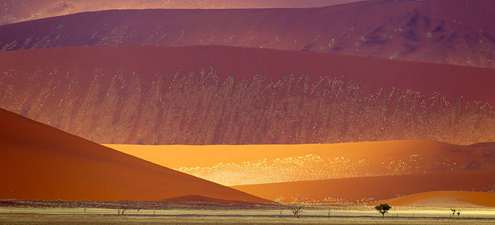 The unrealistically colored dunes of the Namib desert