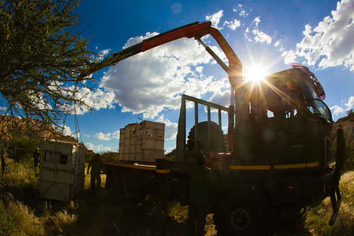 A rhinoceros container is being unloaded to release a captured rhinoceros in its new home.