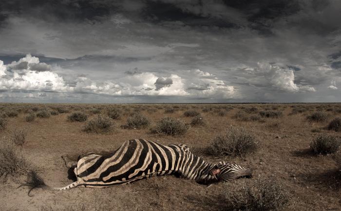 Carcasses like this one litter Etosha's velds after the summer rains.