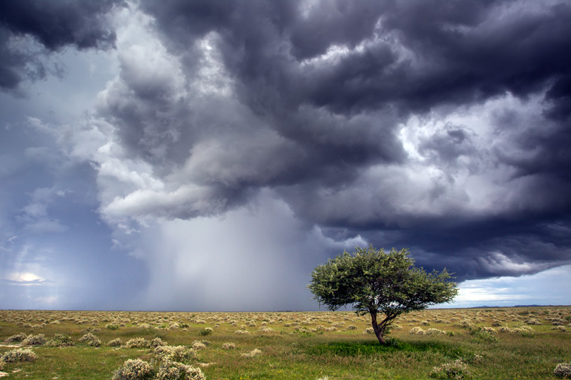 A lone tree stands in the path of a storm near Okondeka!