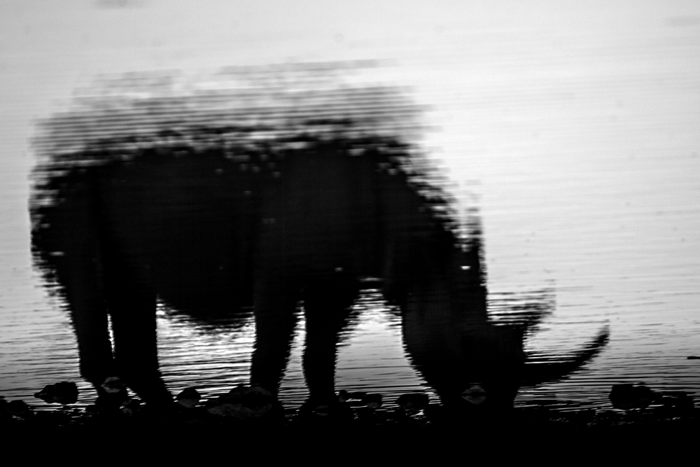 2012 - Rhino reflection